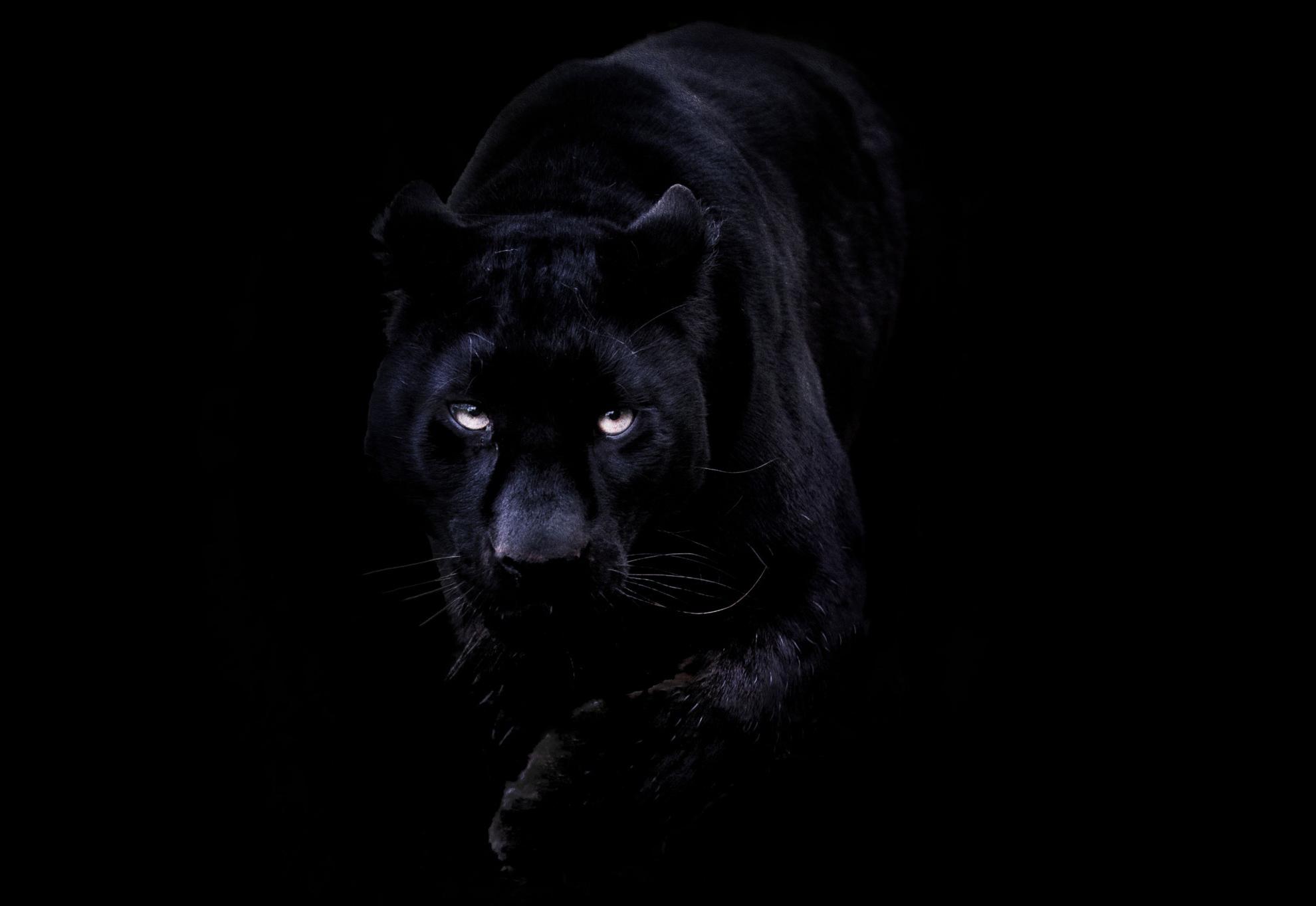 N3W TEAM Panther
